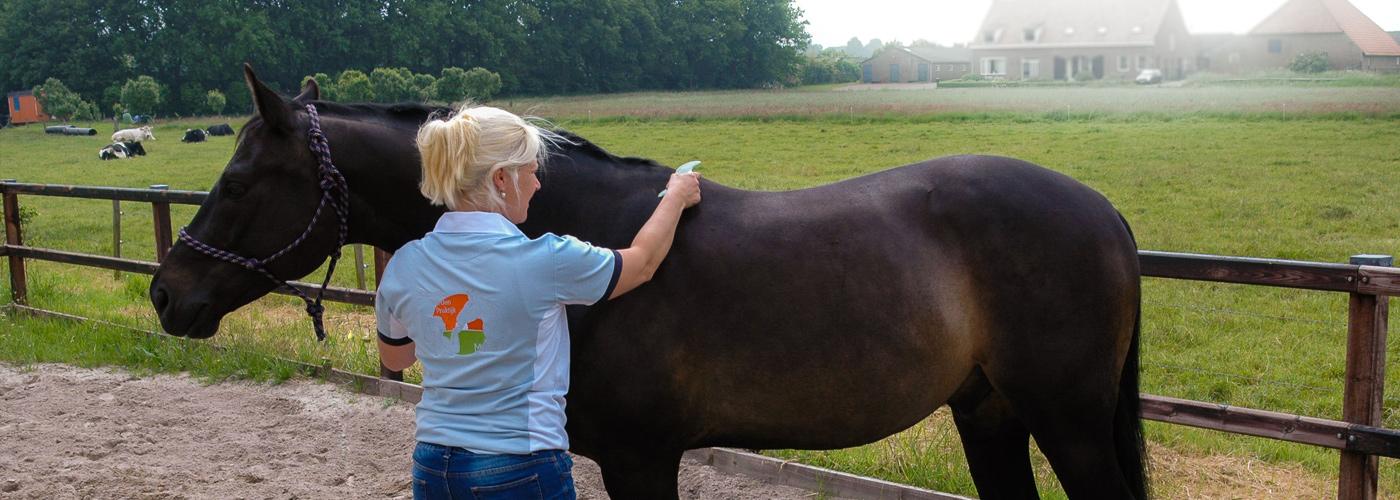 Guasha behandeling Paard