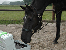 Veterinaire Natuurgeneeskunde NPP Marian Riel www.paardgezondheid.nl